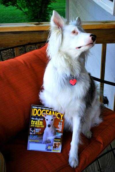 dogfancy